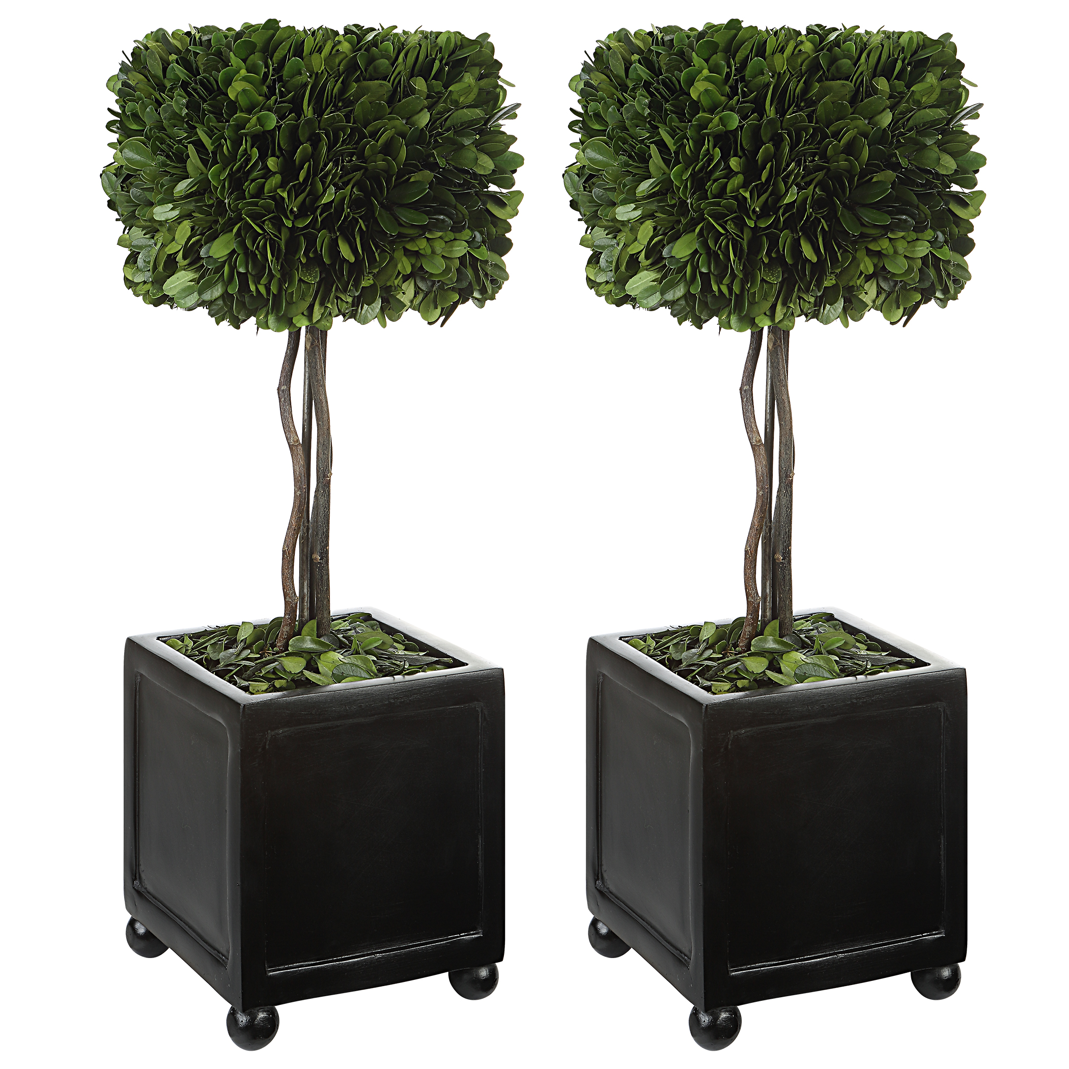 Uttermost Preserved Boxwood Square Topiaries, S/2